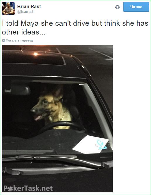 Брайан Раст не может поладить с собакой