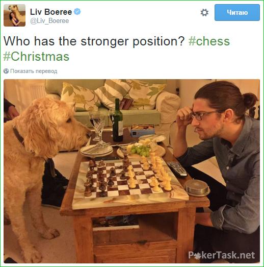 Игорь Курганов играет в шахматы с собакой